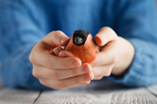 Uccello del ciuffolotto della stretta della ragazza in mani