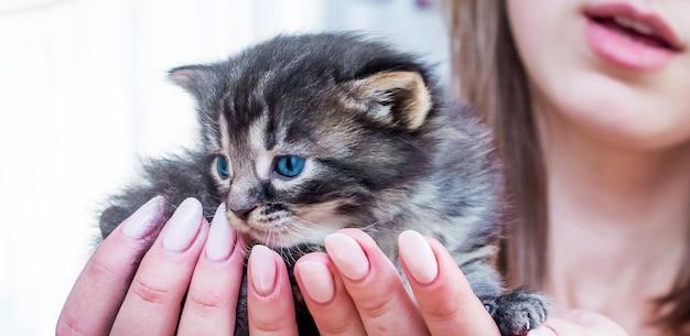 La ragazza tiene sulle sue mani un bellissimo gattino con gli occhi azzurri. manifestazione d'amore per gli animali_