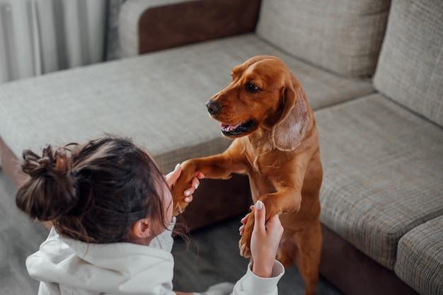 Una ragazza a casa gioca con un cane cocker spaniel, prendendogli le zampe