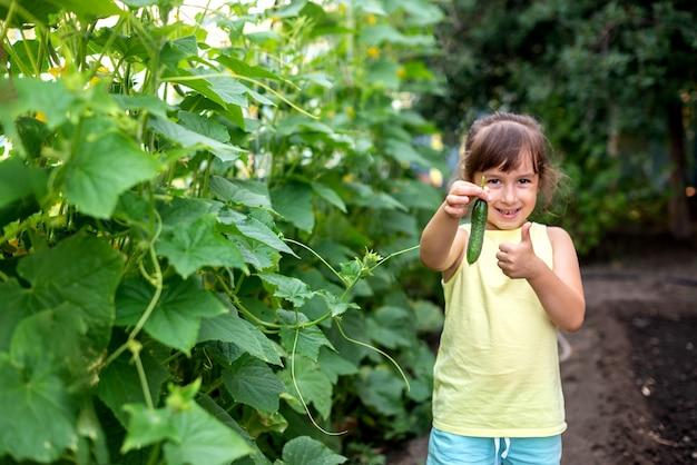 Bambino della ragazza che tiene felicemente raccolto fresco di cetriolo maturo verde. concetto di raccolta di verdure biologiche fatte in casa.
