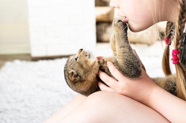 La ragazza gioca con un gattino britannico su un tappeto in un appartamento Foto Premium