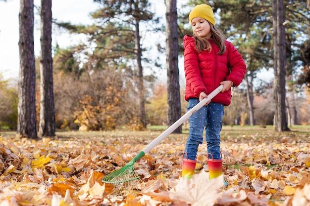 La ragazza in giacca rossa rastrella un mucchio di foglie di acero in autunno