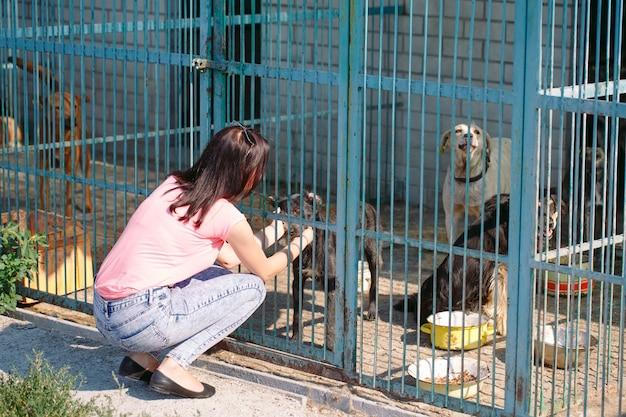 Ragazza volontaria nella scuola materna per cani. riparo per cani randagi.