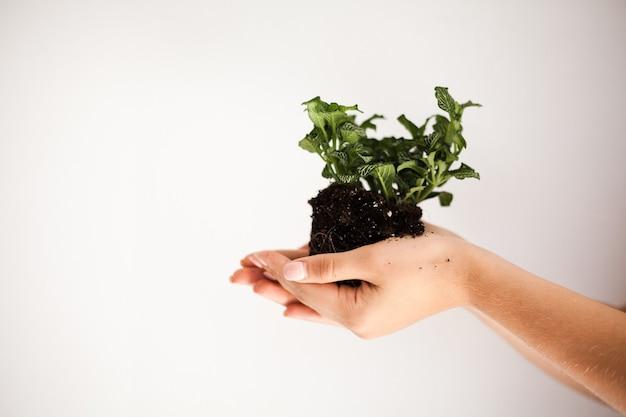 La ragazza trapianterà piante in vaso a casa. terra, piantina, primavera, mani, il concetto di professionista.