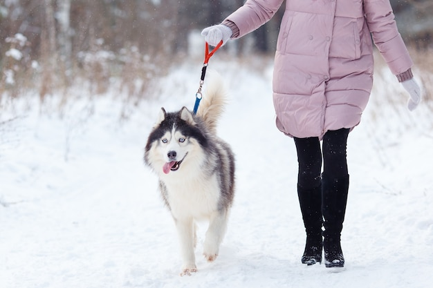 Ragazza con un cane in una passeggiata nella foresta, husky.