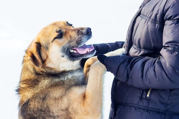 Ragazza con cane in inverno mentre si cammina. la ragazza tiene le zampe del cane nelle sue mani