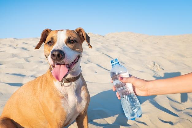 Dare acqua a un cane. la mano femminile tiene la bottiglia di acqua per un animale domestico assetato sulla calda giornata all'aperto