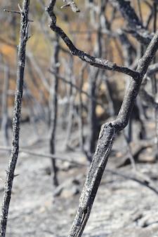 Radura con alberi bruciati ed erba prato nero bruciato