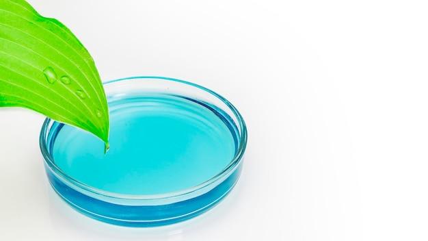 Piastra petri in vetro con acqua blu in cui scorrono gocce da una foglia verde su sfondo bianco. concetto di ricerca biotecnologica. oli naturali naturali. avvicinamento. copia spazio.