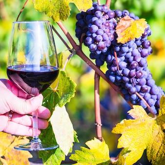 Bicchiere di vino rosso, vigneti e uva.