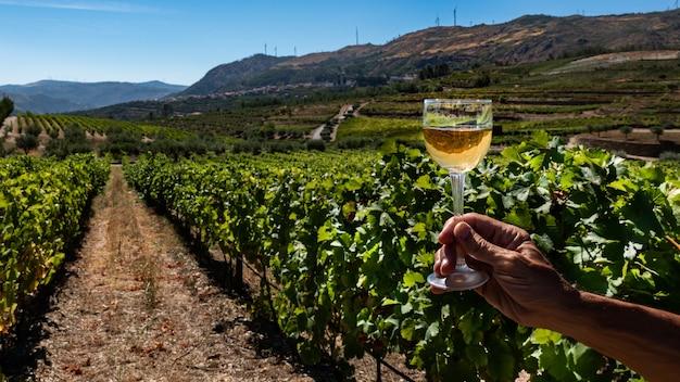 Bicchiere di vino bianco su uno sfondo di vigneto