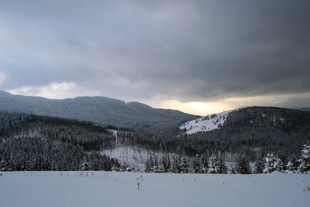 Cupo paesaggio invernale con colline di montagna ricoperte da una foresta di pini sempreverdi dopo abbondanti nevicate in una fredda e tranquilla sera.