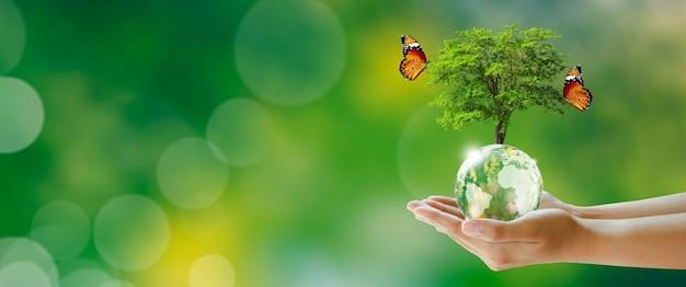 Albero incandescente sulla sfera di cristallo del globo in mano con farfalla sfondo verde con bokeh