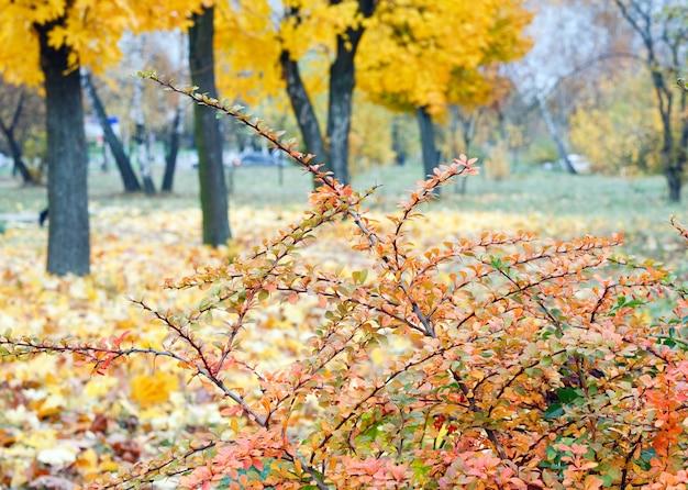 Parco cittadino autunnale dorato (con un grande acero giallo sul davanti)