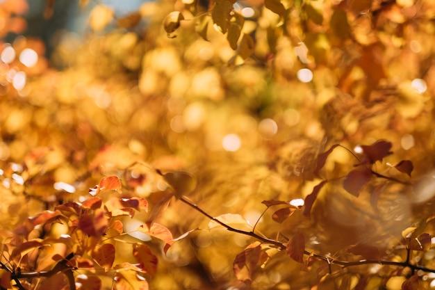 Fogliame autunnale dorato. alberi della foresta sfocata con foglie gialle.