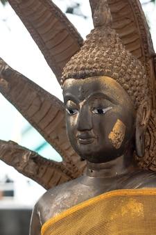 Statua dorata del buddha con il primo piano di posa della copertura di naka, thailandia