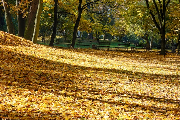 Tappeto dorato di foglie autunnali con ombra di alberi nel parco cittadino.