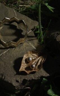 Coppia di orecchini d'oro su foglia secca all'aperto - orecchini d'oro su configurazione autunnale