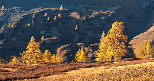 Foresta dorata, steppa e montagna di kurai. monti altai. siberia. russia