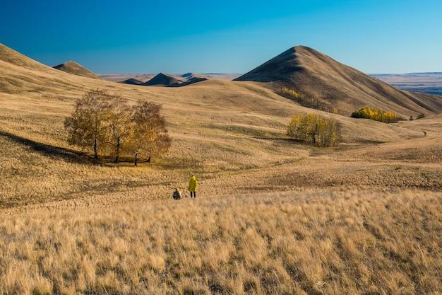 Colline dorate, piccole montagne con alberi in autunno contro il cielo blu