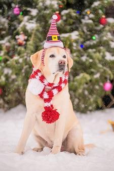Un labrador dorato in una sciarpa si siede vicino a un albero di natale decorato e a una slitta durante una nevicata in inverno nel cortile di un edificio residenziale.