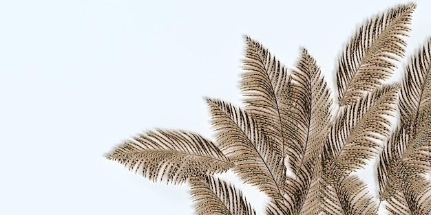 Foglie di palma d'oro su sfondo bianco