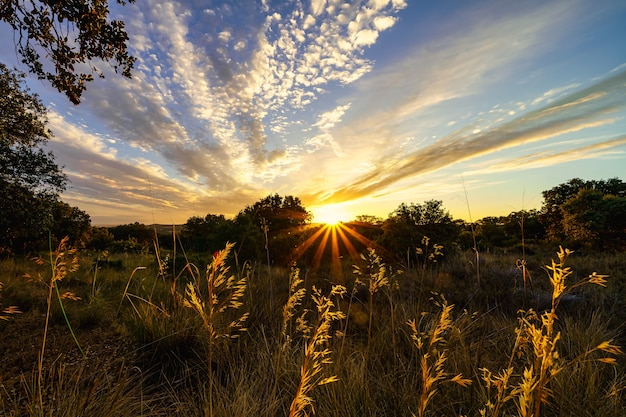 Tramonto dorato con raggi di sole che sorgono all'orizzonte.