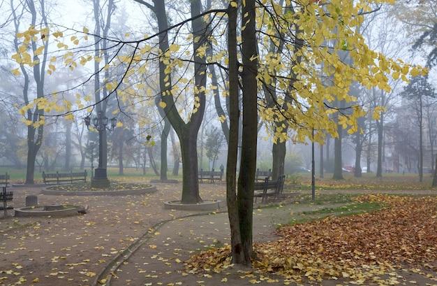 Fogliame dorato, percorso pedonale e foglie secche che cadono nel nebbioso parco cittadino autunnale