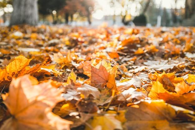 Goldener foglie di autunno al sole
