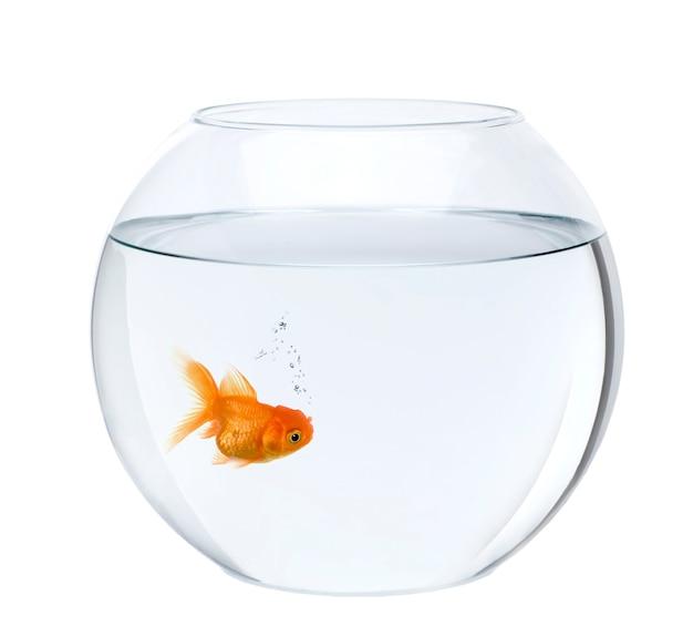Pesce rosso in ciotola del pesce isolata
