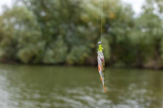 Una buona cattura, piccolo posatoio su un amo da canna da pesca