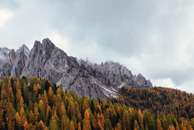 Buon posto turistico. maestose montagne con bellissimi boschi autunnali al giorno nuvoloso. bel paesaggio