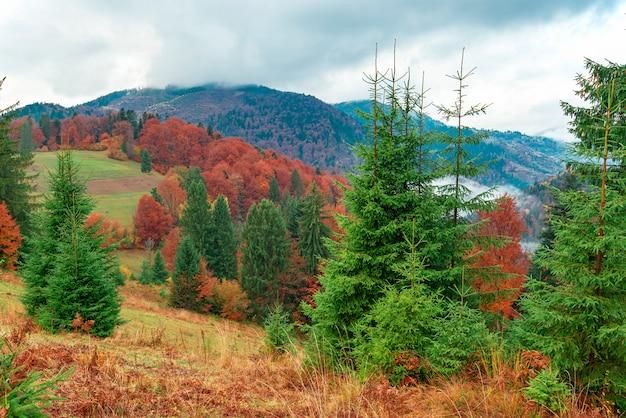 Splendida collina nebbiosa con alberi di conifere colorati