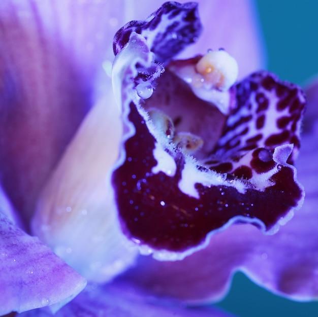 Splendido fiore di orchidea, foto macro
