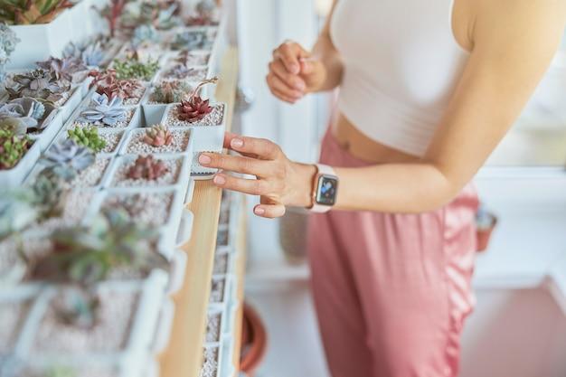 Graziosa signora con smartwatch prende bella succulenta dal rack al chiuso