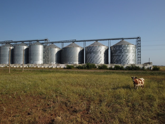 Elevatore del grano del metallo dell'elevatore del grano nell'immagazzinaggio dell'agricoltura della zona agricola per il grano del raccolto