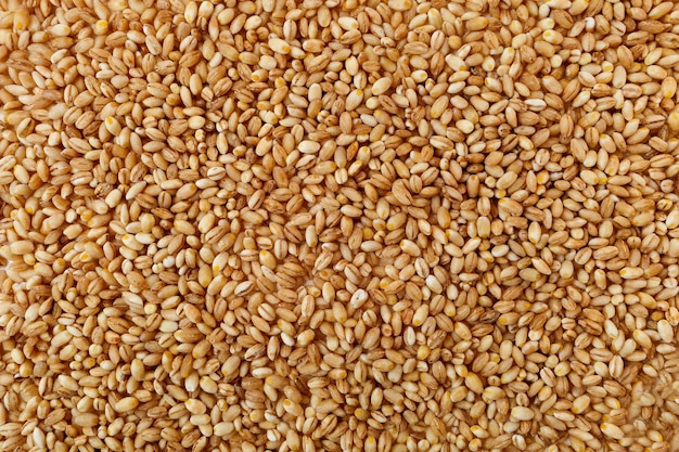 Consistenza del grano di orzo perlato crudo