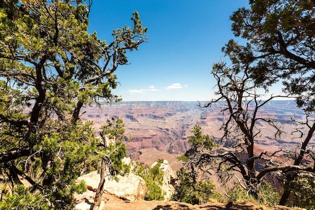 Natura selvaggia del parco nazionale del grand canyon