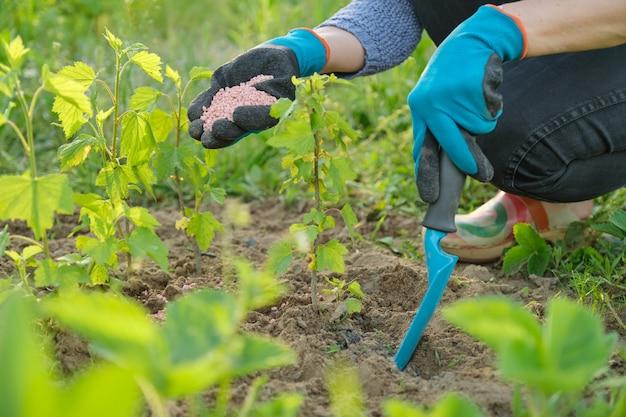 Fertilizzante granuli nelle mani del giardiniere donna