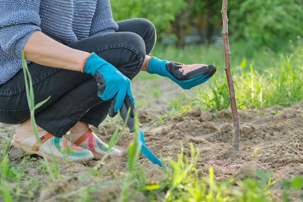 Fertilizzante di granuli nelle mani del giardiniere della donna