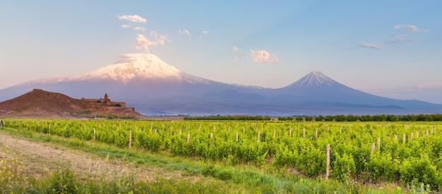 Campo d'uva nella valle dell'ararat. vista di khor virap e del monte ararat. esplorando l'armenia