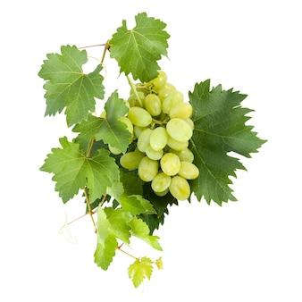 Uva sul ramo isolato su sfondo bianco