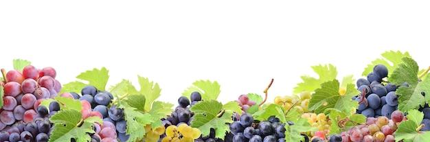 Uva su sfondo bianco