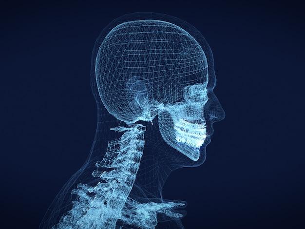 Immagine grafica del wireframe del cranio umano