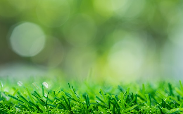Fondo del campo di erba, natura verde