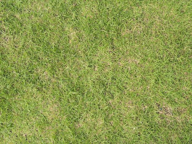 Trama del campo in erba