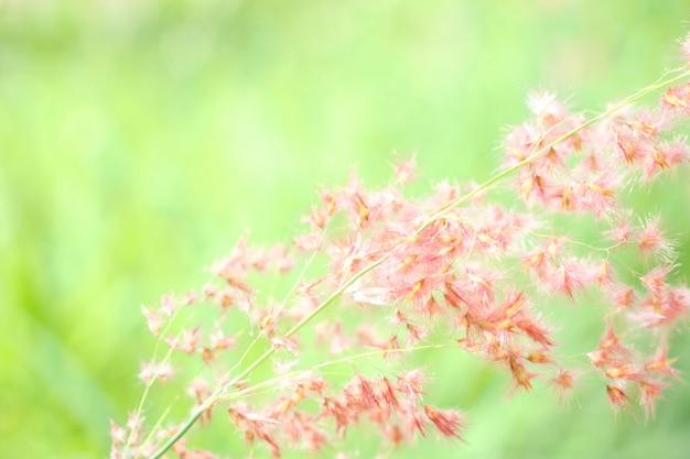 Campo di fiori di erba in uno sfondo pastello verde rosa con messa a fuoco morbida con luce solare