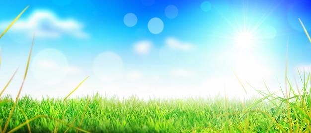 Campo di fiori di erba in primavera sfondo con luce solare