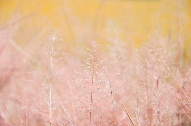 Fiore dell'erba con la priorità bassa arancione della sfuocatura