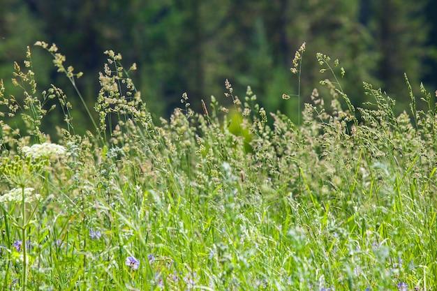 Erba e fiori in primo piano e sfondo sfocato